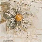 Florence Plissart, gorges du Tarn, Lozère,carnet de voyage Lozère, dessin Lozère, Sainte-Enimie, traditions Lozère, carline, cardabelle
