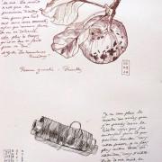 Florence Plissart, dessin du quotidien,dessin d'objet, desssin pomme, dessin fil, desssin bobine, pomme gravelée, mélange dessin texte