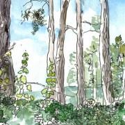 Florence Plissart, arbres, aquarelle, carnet de voyage, croquis forêt, aquarelle forêt, poilvache