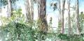 Bois de Poilvache